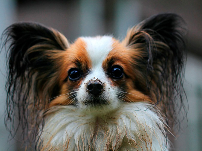 La importancia del corte de pelo para perros