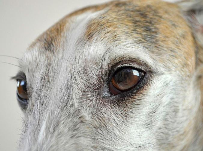 La vista en los perros cómo percibe el mundo tu mascota