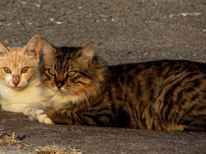Consejos para la convivencia de dos gatos en casa