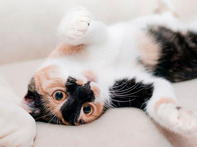 La piel de los gatos enfermedades más comunes