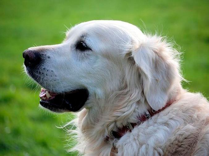 Cómo detectar que tu perro está enfermo
