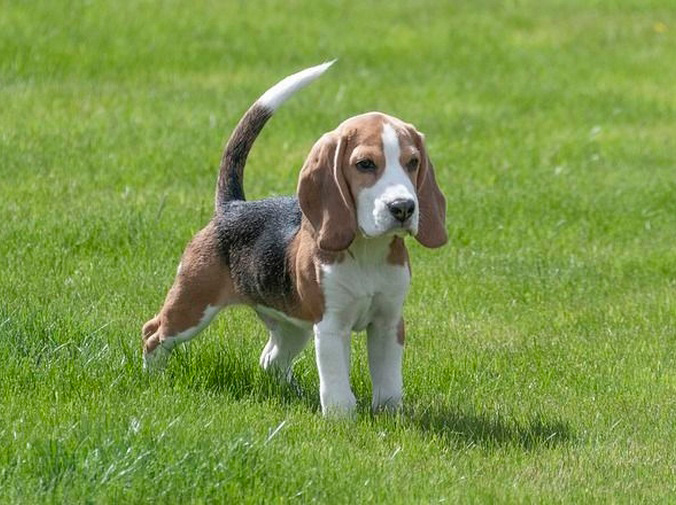 ¿Tu perro olfatea demasiado?